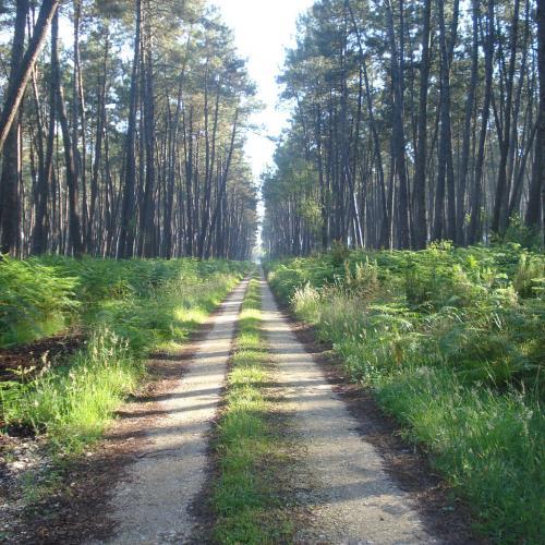 Visit of the Regional Natural Park of the Landes de Gascognes near Bordeaux