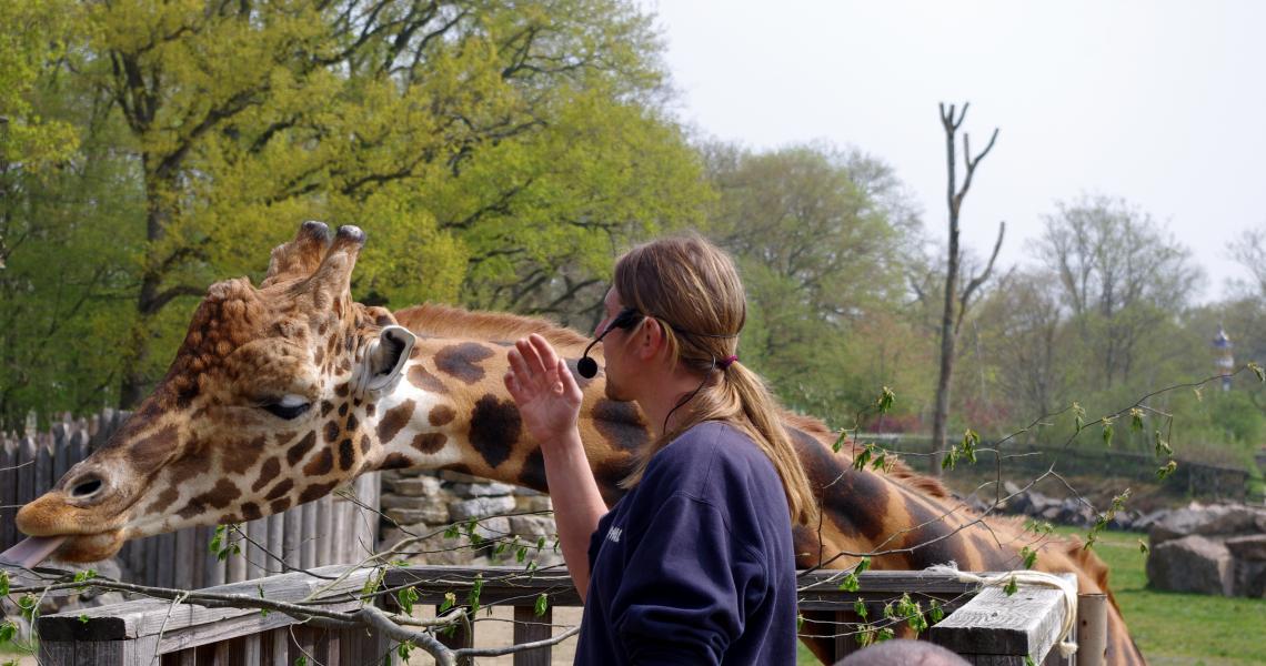 Goûter des girafes au Pal