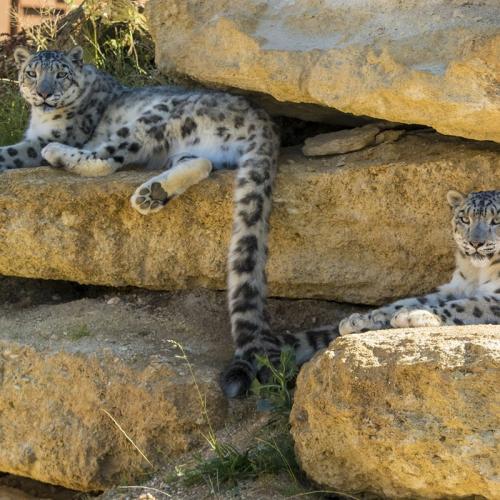 Bioparc – Zoo de Doué-la-Fontaine