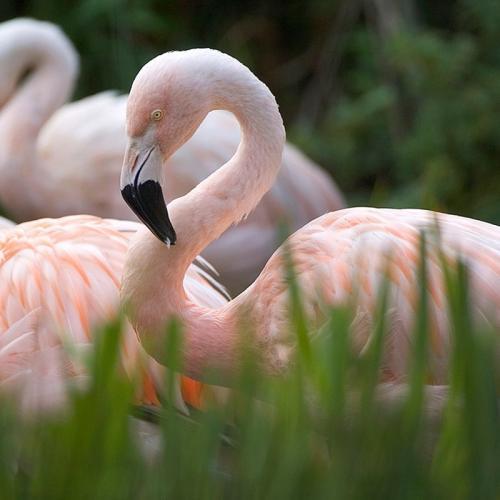 Zoo des Sables-d'Olonne