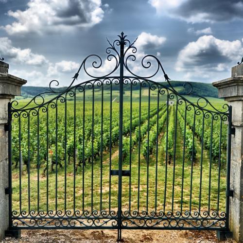 Vignobles de Saint-Émilion