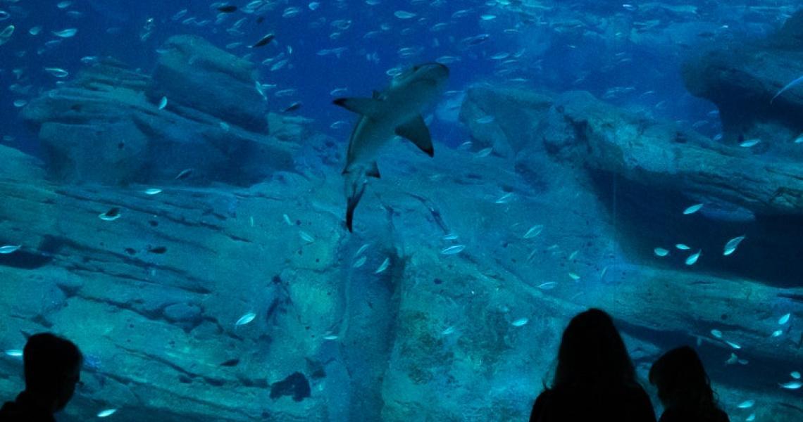 Aquarium de Paris - Callum Tyler